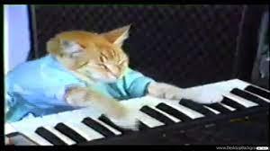 Keyboard Cat YouTube Desktop Background
