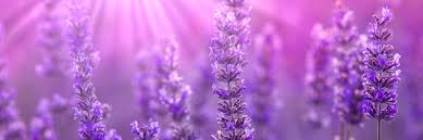 Alchemy Of Light Healing Alchemy Healing Alchemy Of Light