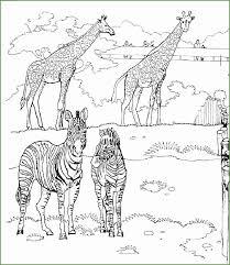 4 Baby Giraffe Kleurplaten 78175 Kayra Examples