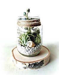air plant terrarium diy 6 8 ball globe shape transpa hanging glass vase flower plants terrarium