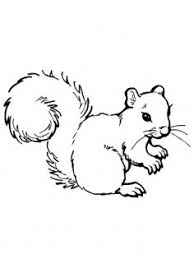 Small Picture Squirrel colouring page I heart Coloring Pages Pinterest