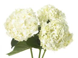 flowers types for weddings 20 types of wedding flowers tropicaltanning