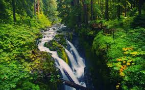 Olympic National Forest Wallpapers Olympic National Forest Full HD