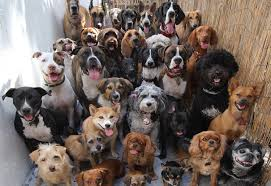 lots of dogs together. Plain Lots On Lots Of Dogs Together M