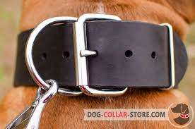 rust resistant nickel hardware on extra wide leather dog collar