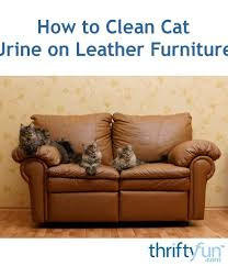 to clean cat urine on leather furniture