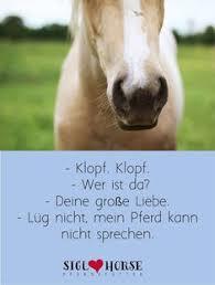 Die 372 Besten Bilder Von Pferdesprüche Deutsch In 2019 Pferde