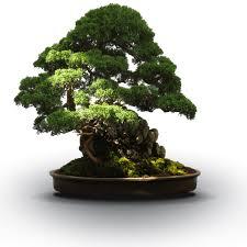bonsai gardens. springs member\u0027s weekend 2018 bonsai gardens r