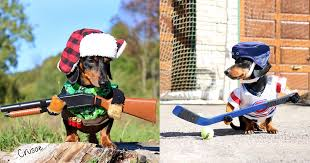 hunting dog costume w rain umbrella dog costume hockey dog costume etc