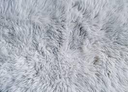 white rug texture. free photo download .jpg white rug texture 0