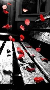 Red, black & white photography #AlphaHydrox -repinned by Southern  California photography studio http