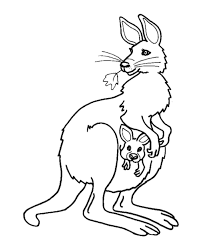 Small Picture Kangaroo Coloring Pages GetColoringPagescom