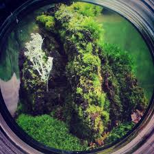 Growing Moss from Spores? Moss Terrariums! - YouTube