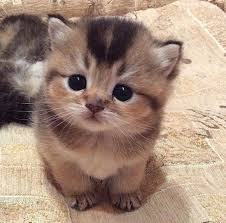 cute fluffy kittens. Unique Kittens Kittens Images Cute Kittens Wallpaper And Background Photos To Cute Fluffy A
