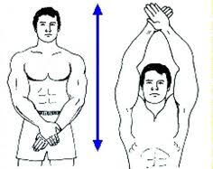 Charles Atlas Isometrics Chart 36 Best Charles Atlas Dynamic Tension Images Exercise Workout