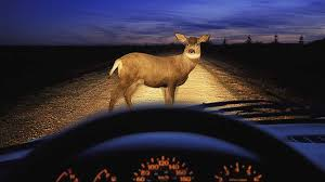 6 imate steps to take if you hit a deer with your car
