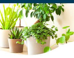 5 best low light tolerant houseplants