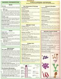 Media Vessel Terminology Microbiology Google Search Bar