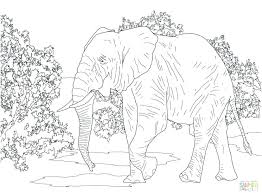 Coloring Pages African Elephant Coloring Page Pictures To Color