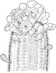 Saguaro Cactus Blossom Coloring Page From