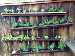 nicely executed herb wall on backyard fence in West Seattle... faces west to
