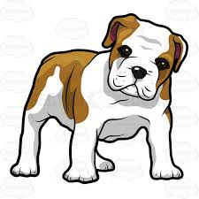 bulldog puppy clipart. Interesting Bulldog English Bulldog Puppy Standing And Looking Ahead Throughout Clipart L