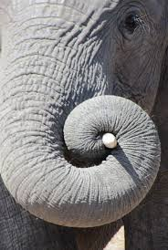 224 best God's fingerprint? Investigating Fibonacci images on ...