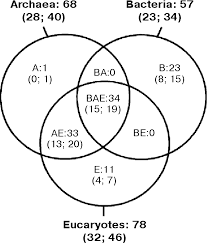 Three Domains Of Life Venn Diagram Figure 1 From Ribosomal Proteins Structure Function And