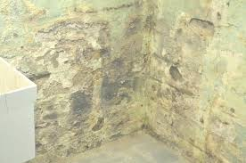how to get rid of mold and mildew on basement walls best foto