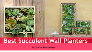succulents can be the right choice to fill your indoor outdoor or garden wall with their colorful and living art presence