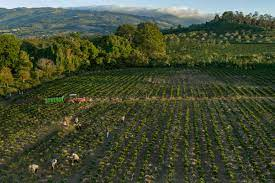 Full day tour a volcan poas with coffee tour at starbucks farm from san jose (from $144.42) poas volcano, la paz waterfalls, and starbucks coffee farm day trip (from $150.48) Climate Change Is Threatening Your Morning Cup Of Coffee Time