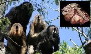 Laser Light To Scare Monkeys Calls Versus Balls Monkeys With Smaller Testicles Roar The