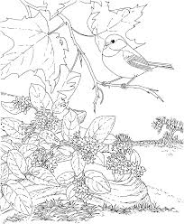 Small Picture Free Printable Coloring PageMassachusetts State Bird and Flower
