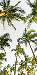 Palm Tree Wallpaper iPhone - KoLPaPer ...