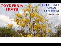 tree tale indian laburnum telugu