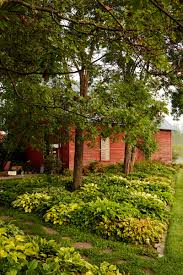 lush landscaping ideas. 50+ Fresh New Ways To Landscape Your Yard Lush Landscaping Ideas