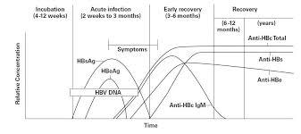 Hep B Serology Chart Chronic Hepatitis Hepatitis B Chronic Carrier Serology