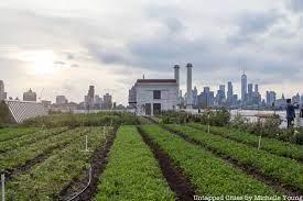 8 of nyc s rooftop farms jetblue farm