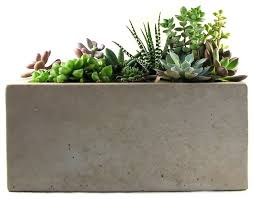 Rectangular Concrete Planter modern-indoor-pots-and-planters