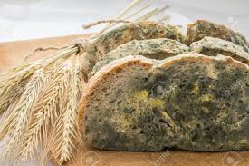 Mold Growing Rapidly On Moldy Bread In Green And White Spores Stock