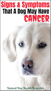 symptoms of dog cancer be aware of