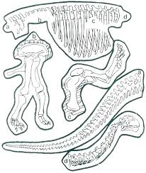 Fossil Coloring Pages Skeleton Coloring Page Pencil And In Color