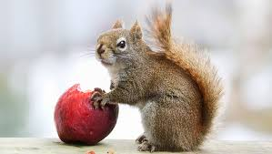 Best 25 Squirrel Repellant Ideas On Pinterest  Squirrel Baffle How To Protect Your Fruit Trees From Squirrels