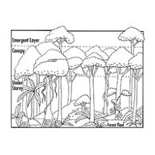 nature coloring pages layers of rainforest