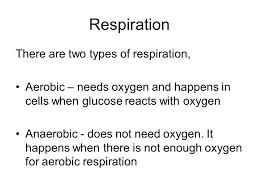 4 respiration