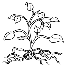 Small Picture Beautiful Design Ideas Coloring Pages Trees Plants And Flowers 15