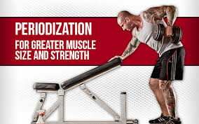 Periodization Training Builds Muscle Size And Strength