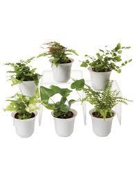 Fern Terrarium Plant Collection, Set of 6