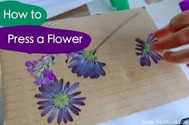 Flower Pressed Paper How To Press A Flower Tinkerlab