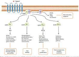 Gpcr Signaling Pdf Dissection Of Aberrant Gpcr Signaling In Tumorigenesis
